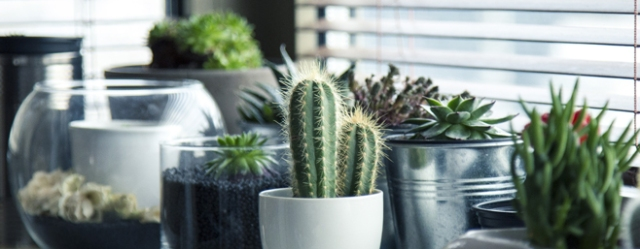 plante-interieure-jardin-pot